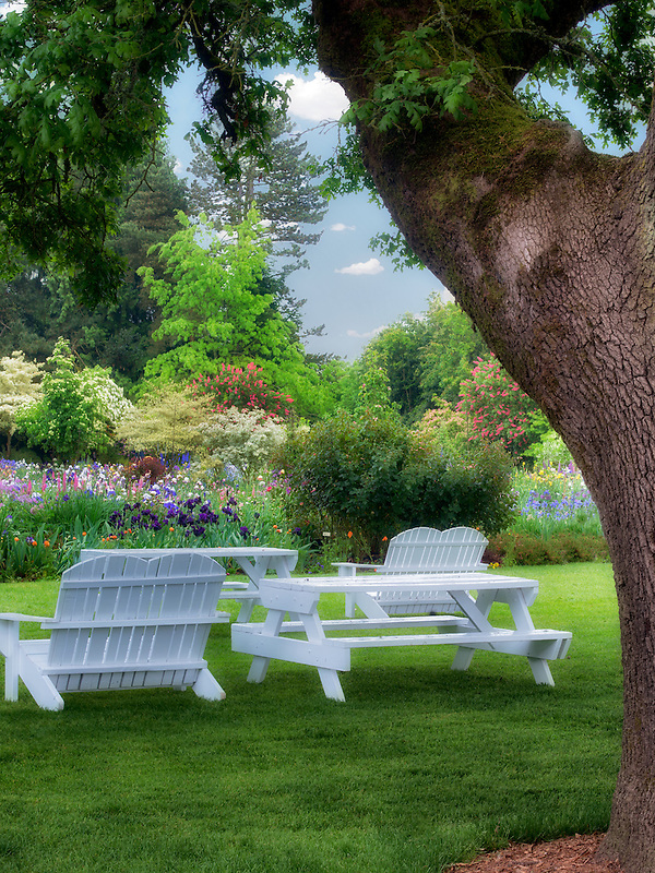Picnic area with tables and chairs and large oak tree. Schrieners Iris Gardens. Oregon