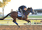 November 5, 2020: Mr. Money, trained by trainer W. Bret Calhoun, exercises in preparation for the Breeders' Cup Dirt Mile at  Keeneland Racetrack in Lexington, Kentucky on November 5, 2020.Jessica Morgan/Eclipse Sportswire/Breeders Cup