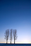Europa, DEU, Deutschland, Nordrhein Westfalen, NRW, Rheinland, Niederrhein, Duesseldorf-Hubbelrath, Abendstimmung, Baeume,Winter, Himmel, Pappeln, Kategorien und Themen, Natur, Umwelt, Landschaft, Jahreszeiten, Stimmungen, Landschaftsfotografie, Landschaften, Landschaftsphoto, Landschaftsphotographie, Wetter, Wetterelemente, Wetterlage, Wetterkunde, Witterung, Witterungsbedingungen, Wettererscheinungen, Meteorologie, Wettervorhersage<br /> <br /> [Fuer die Nutzung gelten die jeweils gueltigen Allgemeinen Liefer-und Geschaeftsbedingungen. Nutzung nur gegen Verwendungsmeldung und Nachweis. Download der AGB unter http://www.image-box.com oder werden auf Anfrage zugesendet. Freigabe ist vorher erforderlich. Jede Nutzung des Fotos ist honorarpflichtig gemaess derzeit gueltiger MFM Liste - Kontakt, Uwe Schmid-Fotografie, Duisburg, Tel. (+49).2065.677997, <br /> archiv@image-box.com, www.image-box.com]