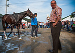 Bodemeister gets a bath after morning workouts for the 138th Kentucky Derby at Churchill Downs in Louisville, Kentucky on May 3, 2012. His owner Ahmed Zayat stood by enjoying the scene.