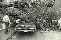 1977 FILE PHOTO - ARCHIVES -<br /> <br /> Smothered: A fallen tree all but covers a car on Dublin St. Owner checks damage<br /> <br /> Bezant, Graham<br /> Picture, 1977<br /> <br /> 1977<br /> <br /> PHOTO : Graham Bezant - Toronto Star Archives - AQP