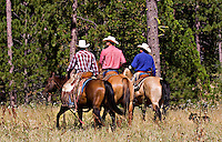 Three western California cowboys ride side by side, one wearing a blue shirt, one wearing a red checked shirt, one wearing a red striped shirt, on three bay and chestnut horses, with black cow dog following along, through grass near pines in the California Sierras.