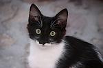 Adorable Kitten with intense yellow eyes