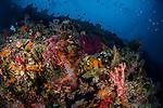 Beautiful Reef Whales Rock, Misool, Indonesia