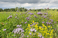 2-8-2021 Cover crop<br /> ©Tim Scrivener Photographer 07850 303986<br />      ....Covering Agriculture In The UK....