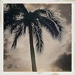 A ageless palm tree image off the shores of Waikiki Beach, Hawaii.
