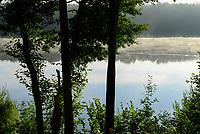 GERMANY, Plau, forest / DEUTSCHLAND, Plau, See und Wald, Seenebel