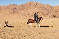 Asia Mongolia, Altai mountain,Saikhsai, the hunter ,60 old Saelikhan train his 3 years old eagle Tastulukh