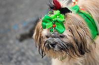 A dog, wearing a fancy costume, participates in the Blocao pet carnival show at Copacabana beach in Rio de Janeiro, Brazil, 12 February 2012.