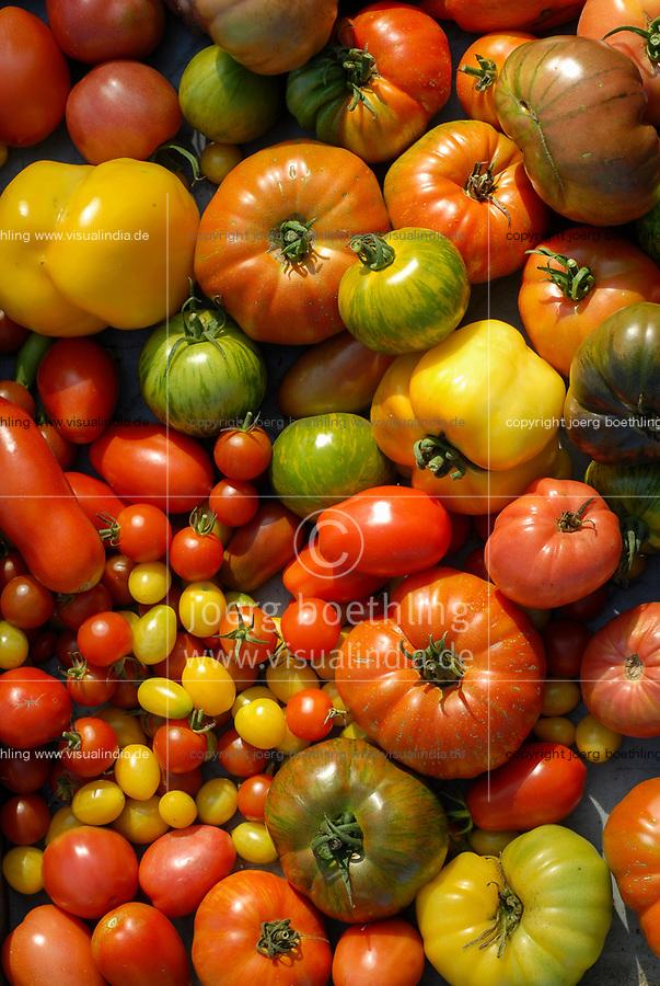 GERMANY, cultivation old and different tomato varieties, tomato diversity / DEUTSCHLAND, Anbau von verschiedenen traditionellen Tomatensorten