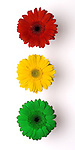 If traffic lights were made of daisies