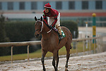 February 6, 2021: Boldor (5) with jockey David Cabrera aboard after winning the King Cotton Stakes at Oaklawn Racing Casino Resort in Hot Springs, Arkansas on February 6, 2021. Justin Manning/Eclipse Sportswire/CSM