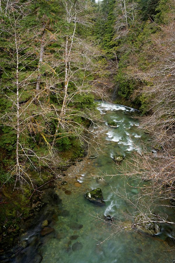 Matheny Creek, Olympic National Forest, Washington, USA