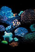 coraux fluorescents à l'aquarium de Nouméa