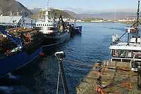 10/15/03 crab NWS::  Co owner and captain of the F/V Exito, Quinn Ferguson drives the crabber through the east channel of Iliuliuk (CQ) Harbor passing crabbers and trawlers tied up to the Alyeska Seafoods dock in Unalaska, Alaska, heading to the red king crab grounds in Bristol Bay about 160 miles away.