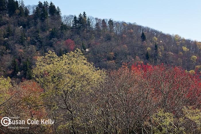 Springtime at Yellow Face, Blue Ridge Parkway, NC, USA
