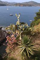 - gulf of Porto Azzurro (Island of Elba), Mediterranean vegetation....- golfo di Porto Azzurro  (Isola d'Elba), vegetazione mediterranea