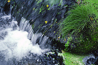 Il fiume Treja da origine alle cascate di Monte Gelato, che si trovano in un'area naturale all'interno del parco Suburbano Valle del Treja.The Monte Gelato waterfalls are situated in a natural park within the Suburban Treja Valley...