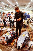 bluefin tuna, Thunnus thynnus, to be auctioned, Tsukiji Market, Tokyo, Japan, Pacific Ocean