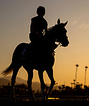 OCT 30: Breeders' Cup Turf entrant Bandua, trained by Jack Sisterson, at Santa Anita Park in Arcadia, California on Oct 30, 2019. Evers/Eclipse Sportswire/Breeders' Cup