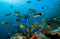 Tropical Fish on Coral Reef, Current City, Komodo National Park, Indonesia