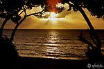 Sunset through trees at Sunset Beach
