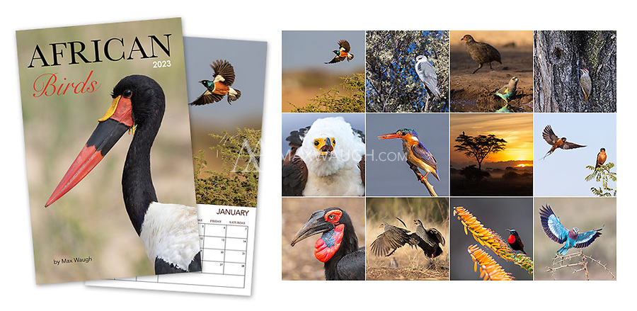 """**For international orders, please click on the red text in the top right corner.**<br /> <br /> This calendar highlights the unique and colorful birdlife of the African continent. All photos were taken in the wild in South Africa, Tanzania, and Botswana.<br /> <br /> Each month's photo measures a full 11 x 11, so these calendars now look even better on your wall. Calendars are printed on full 11"""" x 17"""" pages, spiral-bound at the top. Each interior page contains an image and full calendar for the month, so they are the equivalent of an 11"""" x 8.5"""" calendar that is folded open. Note that these calendars do not come with a pre-punched hole for hanging."""