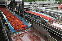 ITALY, Parma, Basilicanova, tomato canning company Mutti s.p.a., founded 1899, fresh plum tomatoes are conserved as canned tomato, pulpo, passata and tomato concentrate, washing unit / ITALIEN, Parma, Basilicanova, Tomatenkonservenfabrik Firma Mutti spa, die frisch geernteten Flaschentomaten werden zu Dosentomaten, Passata und Tomatenmark verarbeitet und konserviert, alles 100 Prozent Italien, Waschanlage