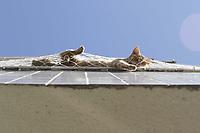 Campinas (SP), 27/08/2020 - Cena urbana - Gato e visto tomando sol em varanda de predio e seguro por telas de protecao, na cidade de Campinas (SP). (Foto: Denny Cesare/Codigo 19/Codigo 19)