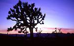 Dusk outlines unique Joshua Trees in Joshua Tree National Park, California