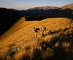 Musterers on Glenrock Station. Upper Rakaia Valley. Canterbury New Zealand.