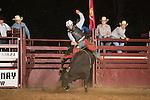 SEBRA- Powhatan, VA - 9.5.2015 - Bulls & Action