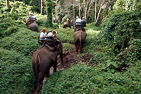 Tourists ride elephants at  Mae Sa Elephant Camp, Chaing Mai, Thailand