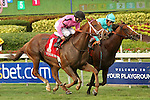 HALLANDALE BEACH, FL -APRIL 02:  Scenes from the Florida Derby.  #1 Kaigun (ON) with Joe Bravo on board wins the Pan American Stakes G2 by a head over #7 Wake Forest (GER) with jockey John Velazquez on April 2nd, 2016 at Gulfstream Park in Hallandale Beach, Florida. (Photo by Liz Lamont/Eclipse Sportswire/Getty Images)