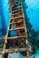 An abandoned ladder is encrusted with algae and sponges at Salt Pier, Bonaire, Caribbean Netherlands, Caribbean