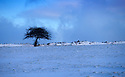 13/01/17<br />  <br /> A lonesome tree in the heart of the Derbyshire Peak District.<br /> <br /> All Rights Reserved F Stop Press Ltd. (0)1773 550665   www.fstoppress.com