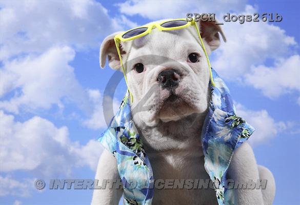 Xavier, ANIMALS, dogs, photos(SPCHdogs261b,#A#) Hunde, perros