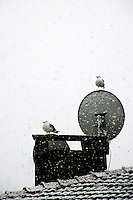 Urban snow scene with seagulls, Istanbul, Turkey