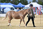 Orsett. United Kingdom. 07 September 2019. Whitmore B ring. Orsett Horticultural and agricultural show. Essex. UK.~ 07/09/2019.  MANDATORY Credit Garry Bowden/Sport in Pictures - NO UNAUTHORISED USE - 07837 394578