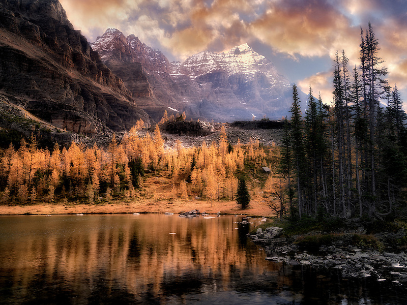 Hungabee Lake and fall colored Larch. .Yoho National Park, Opabin Plateau, British Columbia, Canada
