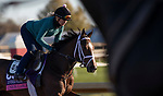 November 4, 2020: Jesus' Team, trained by trainer Jose Francisco D'Angelo, exercises in preparation for the Breeders' Cup Dirt Mile at Keeneland Racetrack in Lexington, Kentucky on November 4, 2020. Carolyn Simancik/Eclipse Sportswire/Breeders Cup