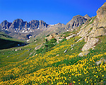 Alpine wildflowers in the American Basin (12,300 feet) below Cinnamon Pass, San Juan Mountains, southwest Colorado, .  John leads wildflower photo tours into American Basin and throughout Colorado. All-year long. John guides custom photo tours in the Sneffels Range and throughout Colorado.