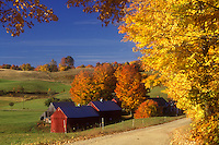 road, Jenne farm, fall, Reading, VT, Vermont, Scenic view of Jenne Farm along a country road surrounded by colorful maple trees in Reading in autumn.