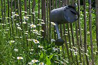 Unser Naturgarten in Hammer, Garten, insektenfreundlicher Garten, vogelfreundlicher Garten, blütenreich, Wildblumen, Wildblumengarten, Margerite, MArgeriten, Gartenzaun, Zaun, Staketenzaun, Stakettenzaun, Lattenzaun, Holzzaun, Rollzaun, garden fence, fence, hash mark, hashmark, batten fence, lattice fence, lattice fencing, paling fence, Gießkanne, Zinkkanne