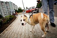A man walks his dog along a street.