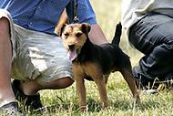 Taunton Vale Dog Show