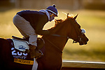 November 2, 2020: .Swiss Skydiver, trained by trainer Kenneth G. McPeek, exercises in preparation for the Breeders' Cup Distaff at  Keeneland Racetrack in Lexington, Kentucky on November 2, 2020. Alex Evers/Eclipse Sportswire/Breeders Cup