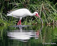 Egrets, Herons, Wading Birds