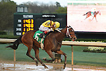 HOT SPRINGS, AR - MARCH 12: Terra Promessa #5 with jockey Ricardo Santana Jr. before crossing the Honeybee Stakes at Oaklawn Park on March 12, 2016 in Hot Springs, Arkansas. (Photo by Justin Manning)