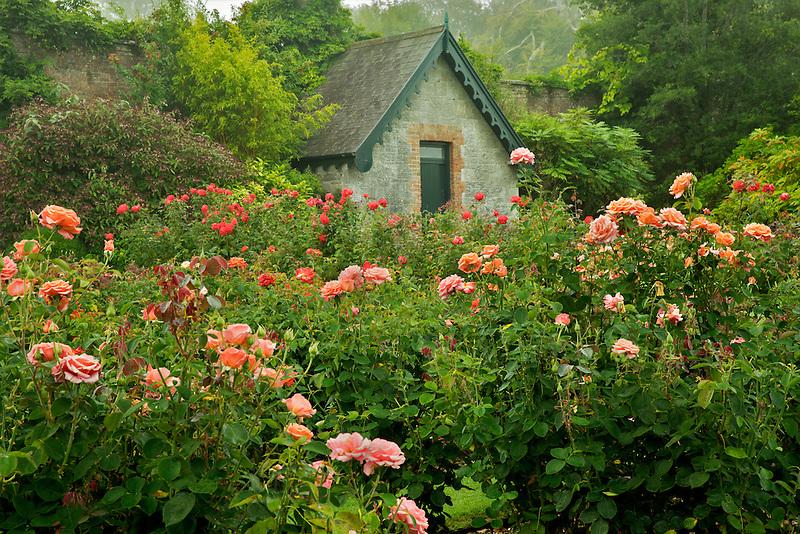 Rose garden and cottage. Gardens at Domoland Castle, Ireland